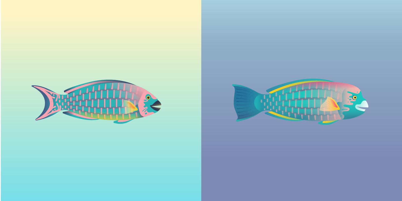 Parrotfish_edit-01